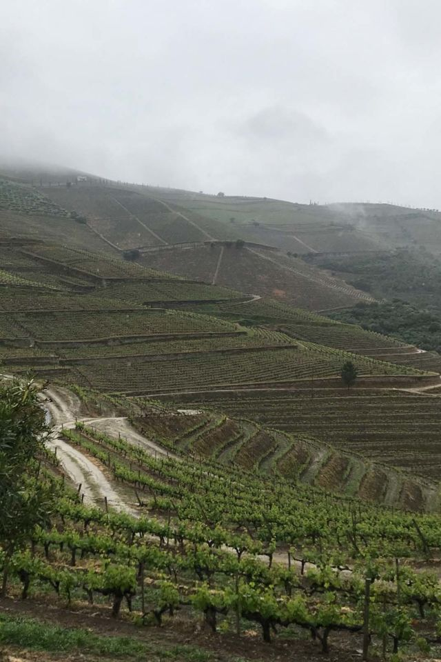 top wineries in the douro valley
