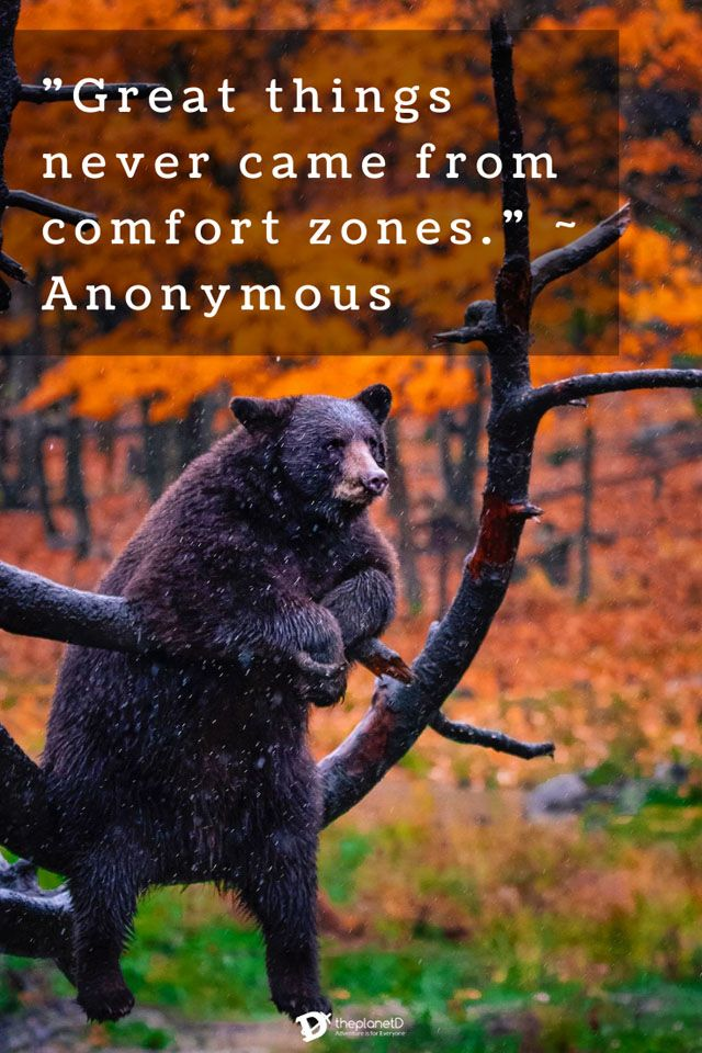 short adventure quotes great things never came from comfort zones